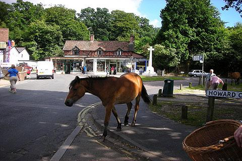 Photo of Burley in New Forest (Hampshire region)