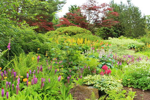 Photo of Harlow Carr Garden in North Yorkshire (North Yorkshire region)