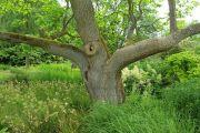 mature-trees